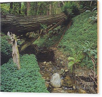Big-sur-t10-5 Wood Print by Craig Lovell