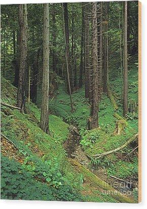 Big-sur-t8-3 Wood Print by Craig Lovell