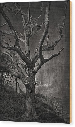 Big Talbot Island Wood Print
