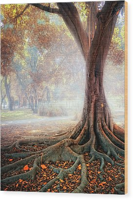 Big Tree Root Wood Print by Zu Sanchez Photography