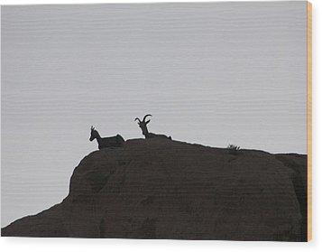 Bighorn Mom And Her Child Wood Print by Carolina Liechtenstein