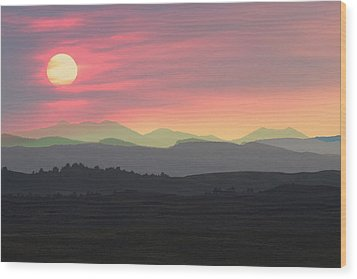 Bighorns At Sunset Wood Print