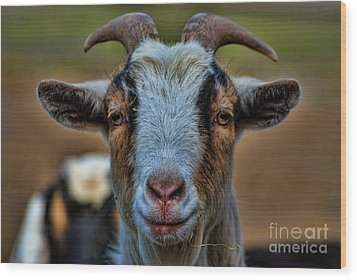 Billy Goat Wood Print by Paul Ward