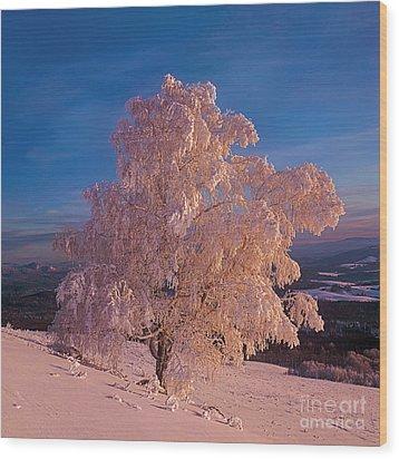 Birch Wood Print by Elena Filatova