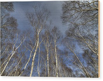 Wood Print featuring the photograph Birch Forest by Tad Kanazaki