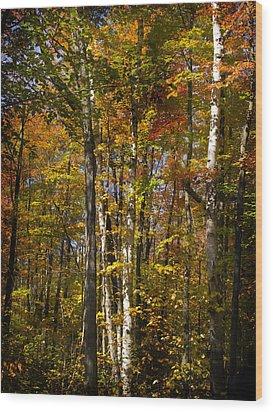 Birch Trail Wood Print by Jo-Anne Gazo-McKim