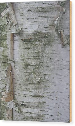 Birch Tree Wood Print by Kathy Peltomaa Lewis
