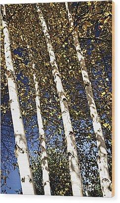 Birch Trees In Fall Wood Print by Elena Elisseeva