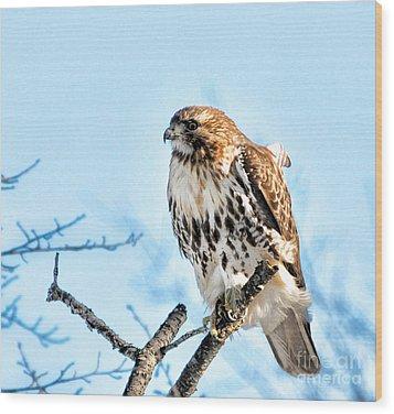 Bird - Red Tail Hawk - Endangered Animal Wood Print by Paul Ward
