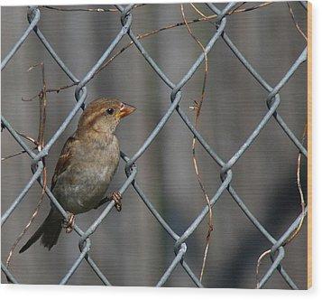 Bird In A Wire Wood Print by Joe Wicks