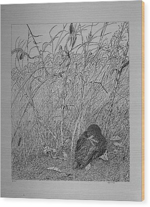 Wood Print featuring the drawing Bird In Winter by Daniel Reed