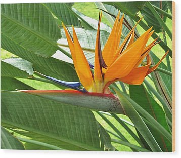Wood Print featuring the photograph Bird Of Paradise by Craig Wood