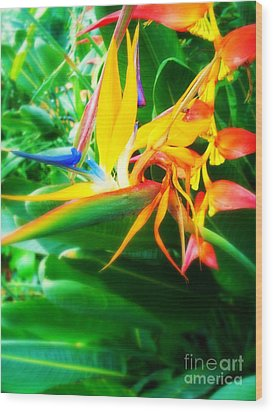 Bird Of Paradise Wood Print by Sacred  Muse