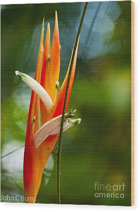 Wood Print featuring the photograph Bird Of Paradise by John Burns