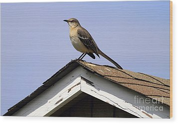 Bird On A Roof Wood Print