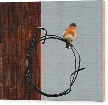 Bird On A Wire Wood Print by Carrie OBrien Sibley