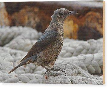 Bird On Deck Wood Print