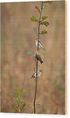 Bird Stack Wood Print