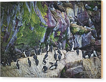 Birds At Cape St. Mary's Bird Sanctuary In Newfoundland Wood Print by Elena Elisseeva