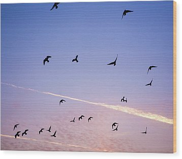 Birds Flying At Sunset Wood Print by Sarah Palmer