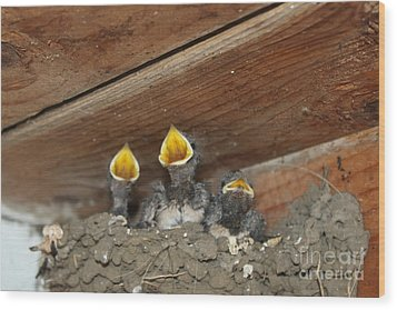 Birds In Nest Picture Wood Print by Preda Bianca