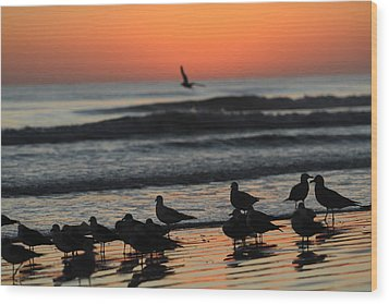 Birds Of A Feather Wood Print by Jose Rodriguez