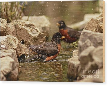 Birds Of A Feather Swim Together Wood Print by Inspired Nature Photography Fine Art Photography