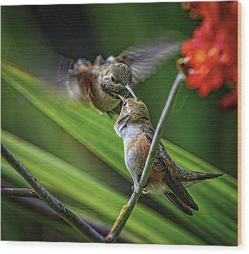 Birds Of Bc - No. 32 - Two Rufous Hummingbirds - Selasphorus Ruf Wood Print by Paul W Sharpe Aka Wizard of Wonders