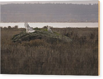 Birds Of Bc - No.15 - Snowy Owl - Bubo Scandiacus Wood Print by Paul W Sharpe Aka Wizard of Wonders
