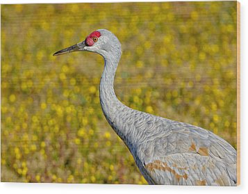 Birds Of Bc - No. 35 - Young Sand Hill Crane Wood Print by Paul W Sharpe Aka Wizard of Wonders