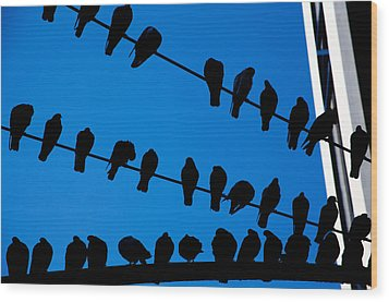 Birds On A Wire Wood Print by Karol Livote