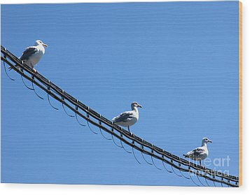 Wood Print featuring the photograph Birds On A Wire by Michelle Joseph-Long