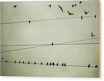 Birds On Telephone Wire Wood Print by Lucy Loomis, Photographer