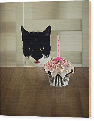 Birthday Cat Wood Print by Elusive Photography