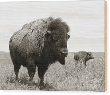 Bison And Calf Wood Print by Olivier Le Queinec