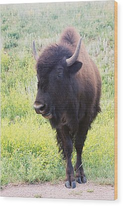 Wood Print featuring the photograph Bison by David Wohlfeil