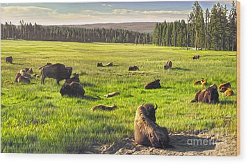 Bison Herd In Yellowstone Wood Print by Gregory Dyer