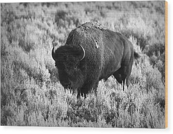 Bison In Black And White Wood Print by Sebastian Musial