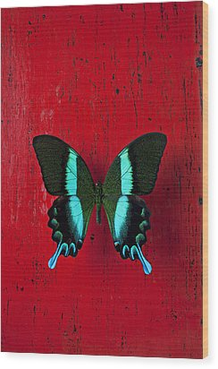 Black And Blue Butterfly  Wood Print by Garry Gay