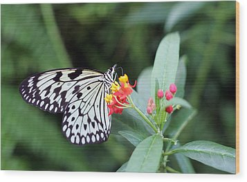 Black And White Butterfly  Wood Print by Abiy Azene