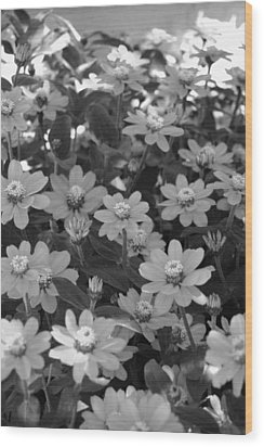 Black And White Flowers Wood Print by Amy Fose