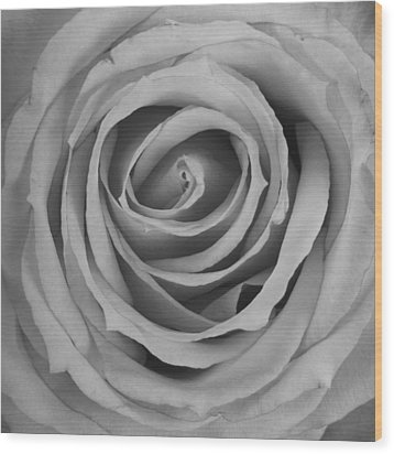 Black And White Spiral Rose Petals Wood Print by James BO  Insogna