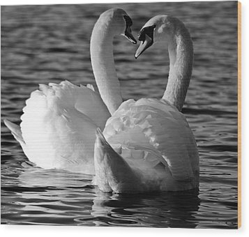 Black And White Swan Heart Wood Print by Geraint Rowland
