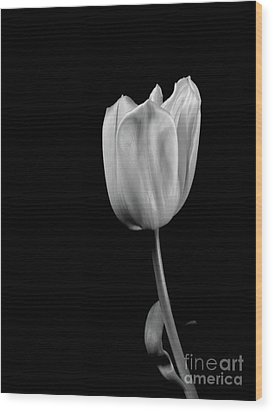 Black And White Tulip Wood Print