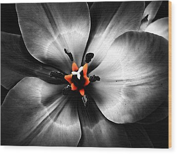 Black And White With A Glow Of Color Wood Print
