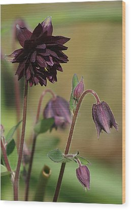 Black Barlow Wood Print