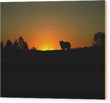 Black Bear Sunset Wood Print