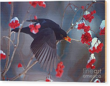 Black Bird In Flight Wood Print by Jerry L Barrett