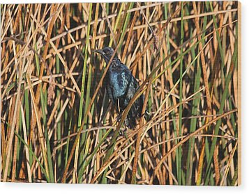 Wood Print featuring the photograph Black Bird by Jeanne Andrews
