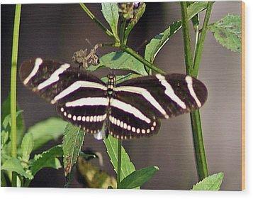 Black Butterfly Wood Print by Joe Faherty